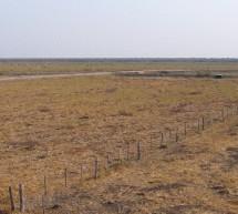 Unas 1443 Has/día se deforestaron en el Chaco en agosto