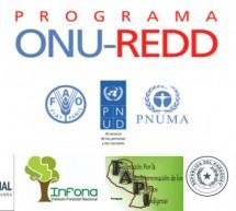 ONU prepara taller para socializar los avances del Plan de Reducción de Emisiones debidas a la Deforestación y Degradación de Bosques
