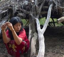 Ministra da su versión de la razón por la que otorgó la licencia a la empresa Yaguareté Porá para el desmonte de tierras de los Ayoreos