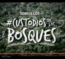 Video oficial de la campaña #CustodiosdelosBosques
