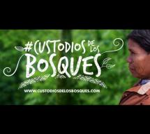 Los spots oficiales de la campaña #CustodiosdelosBosques