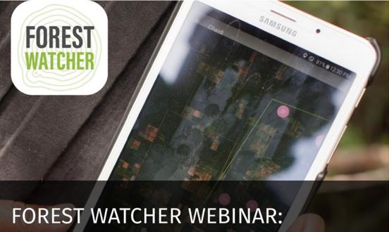 Un webinar sobre la nueva actualización de la app Forest Watcher