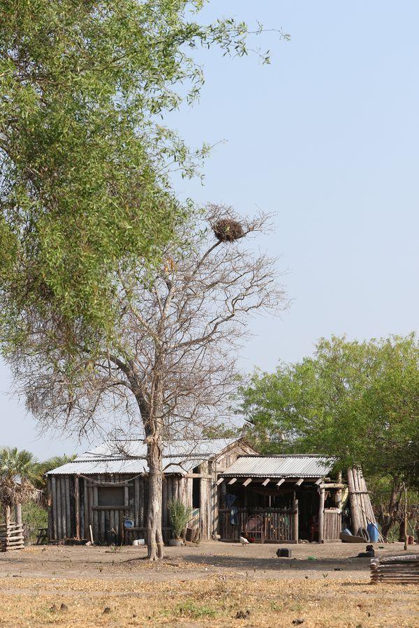 En Karcha Bahlut, así como en Puerto Diana, las casas están hechas de troncos de karanda'y, planta que utilizan las artesanas para sus bolsos y canantas. En esta comunidad la siembran, ya que su escasez amenaza el futuro de la actividad.
